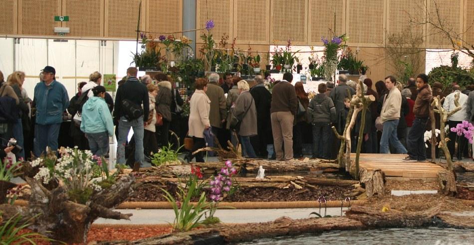 Orchidées 2010 06